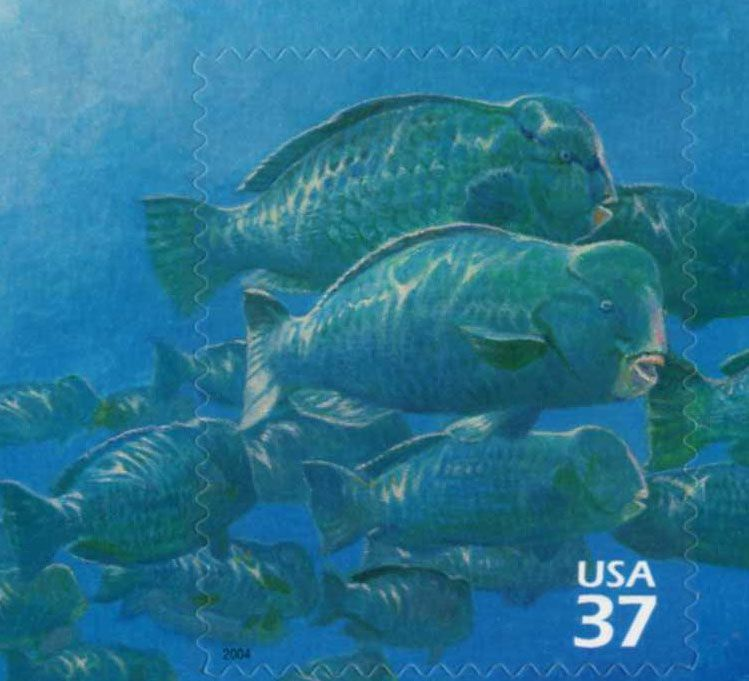 Nature of America Series  #6 Pacific Coral Reef, USA, 2003 Bumphead Parrotfish