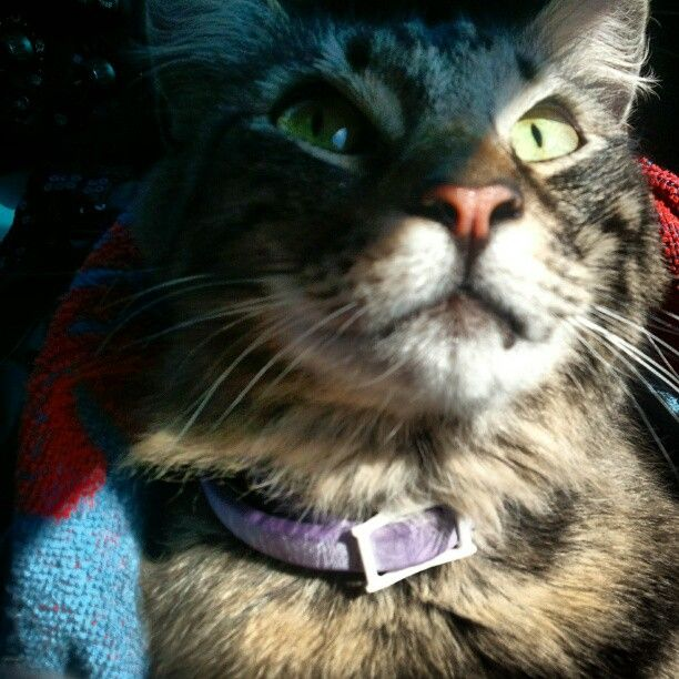 My Cat Midnight He Ran Away Royalty Free Images Stock Photos Photo