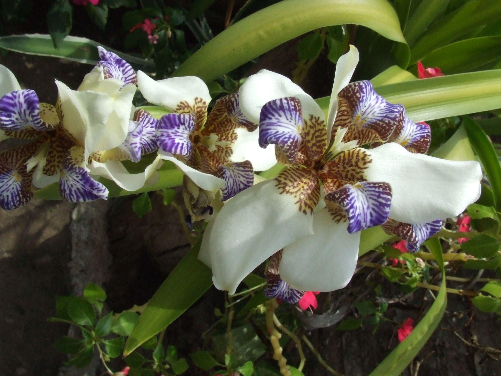 Natureza em flor