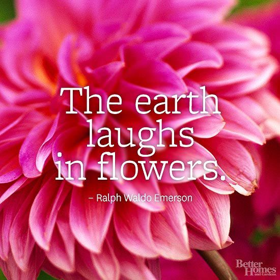 Flower Quotes Garden Gnome Flower Quotes Short Flower Quotes