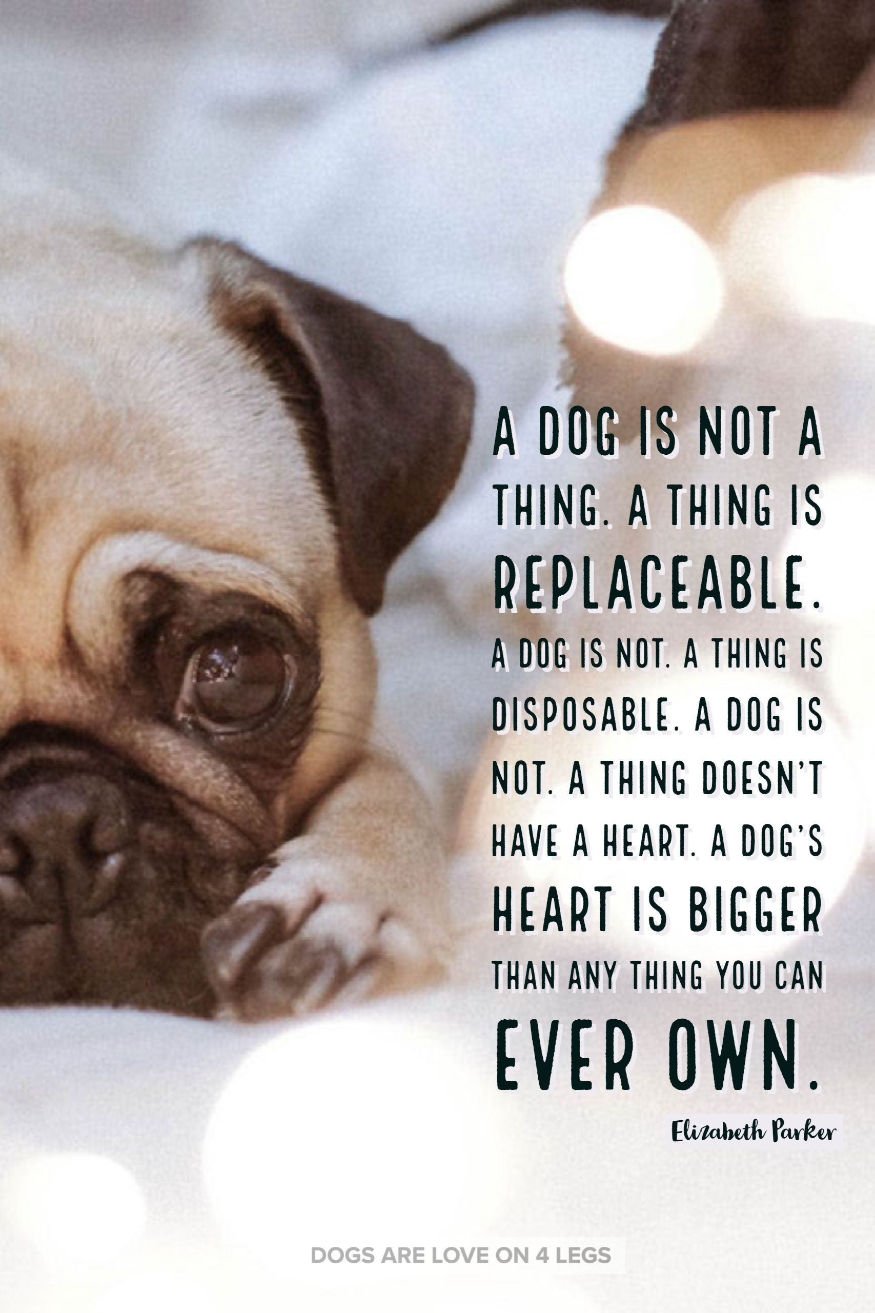 A Do Is Not A Thing Dog Dog Quotes Inspirational Quotes Funny