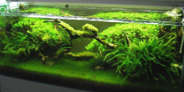 Top 5 Best Aquarium Plants for Aquascaping | Planted ...