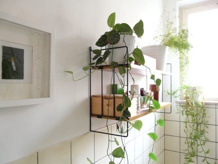 A Simple Guide To Feng Shui Indoor Plants Bathroom Plants Low Light Bathroom Plants Plant Decor