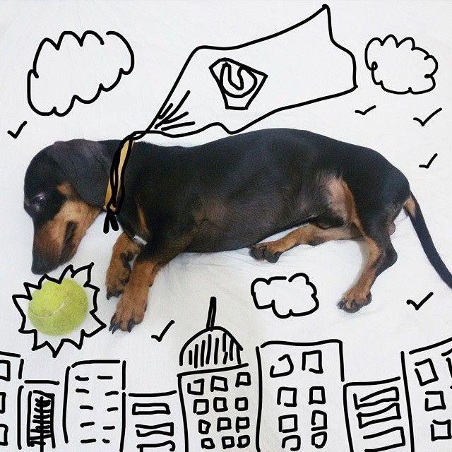 #dachshund #dach