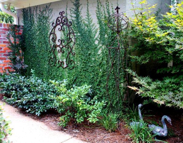 Bepflanzte Wand bepflanzte grüne wand efeu kletterpflanze außenwand draussen