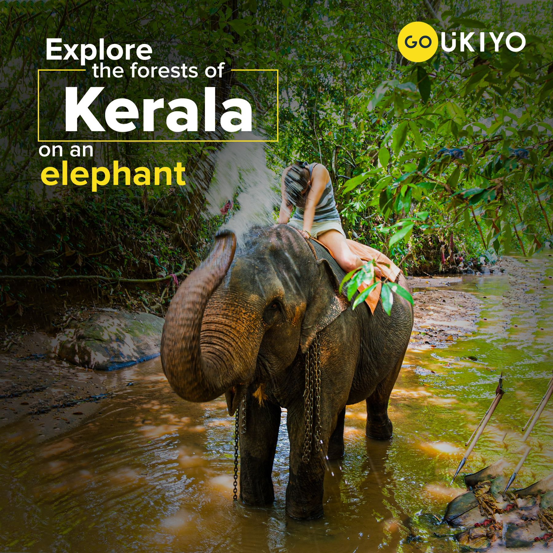 The Elephant Is The State Animal Of Kerala And A Visit To God S