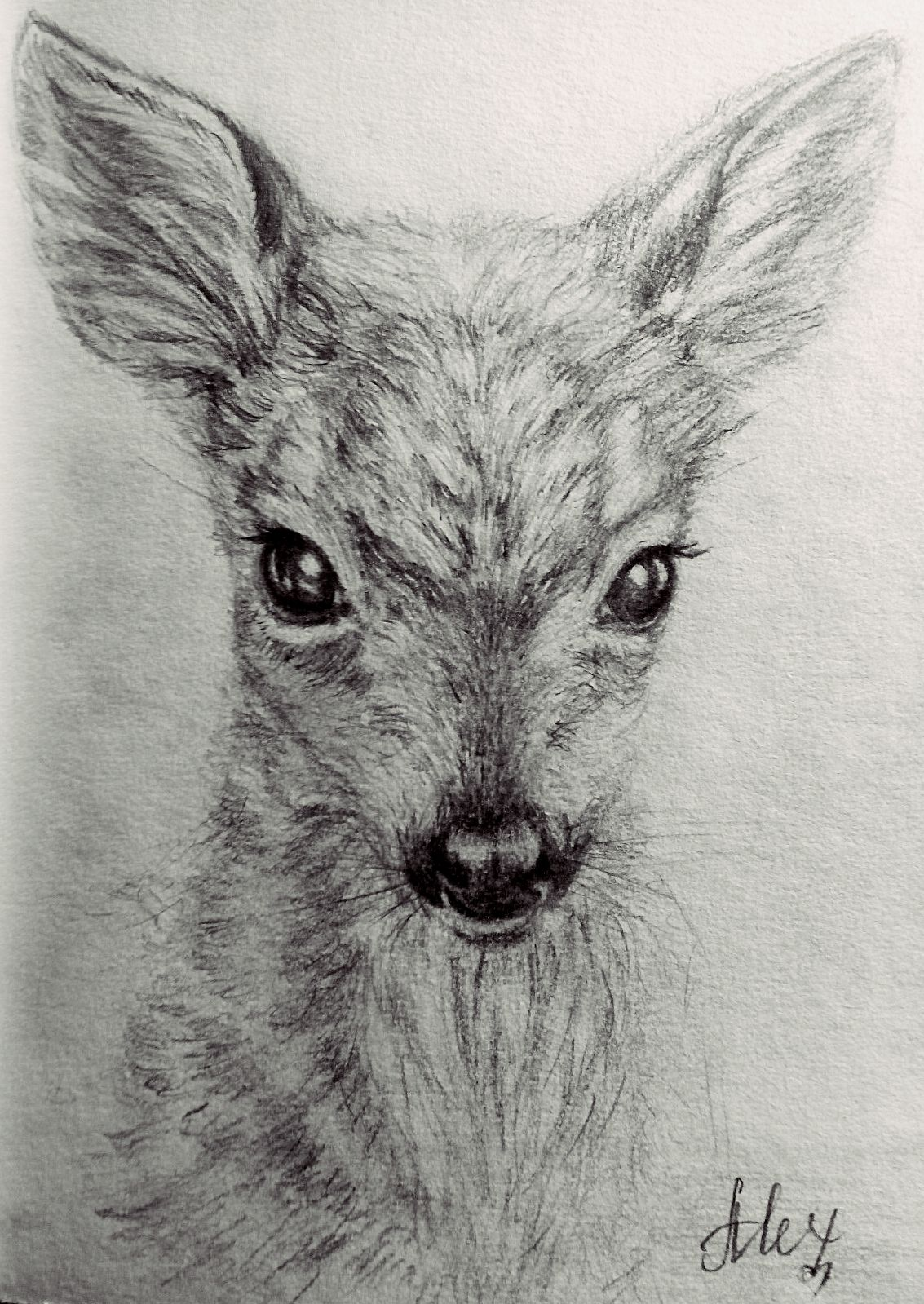 #fawn #drawing #pencil #cute #beautiful Pencil Drawing Of Fawn Watercolour Dibujos