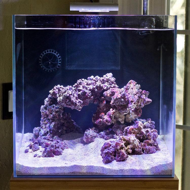 Justind823 2019 Featured Reef Aquariums Nano Reef Com Community Reef Aquarium Coral Fish Tank Marine Fish Tanks