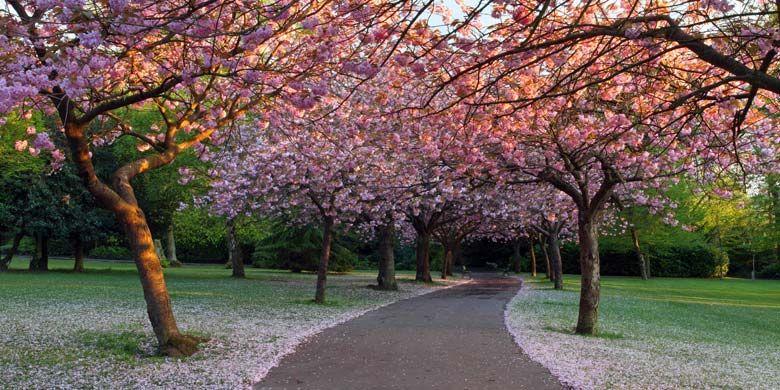 Saltwell Park, Gateshead | Gateshead, Landscape ...