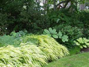 Japanese Forest Grass...love the color and texture