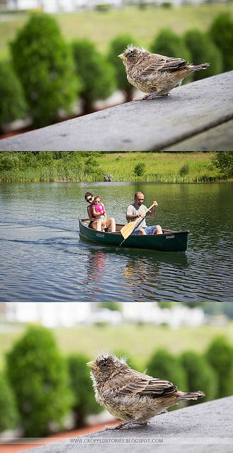 Dayz of Summer PHOTOGRAPHY CHECKLIST (will you take the challenge)?  Feel free to download my free 8.5 x 11 checklist!   http://www.croppedstories.blogspot.com #photochallenge #summer #photographychecklist #babybird #canoe #printable