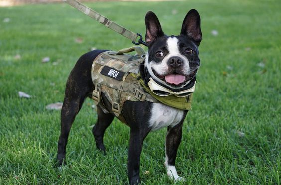 Compact K9 Tactical Molle Dog Vest Small Kiloninerpets