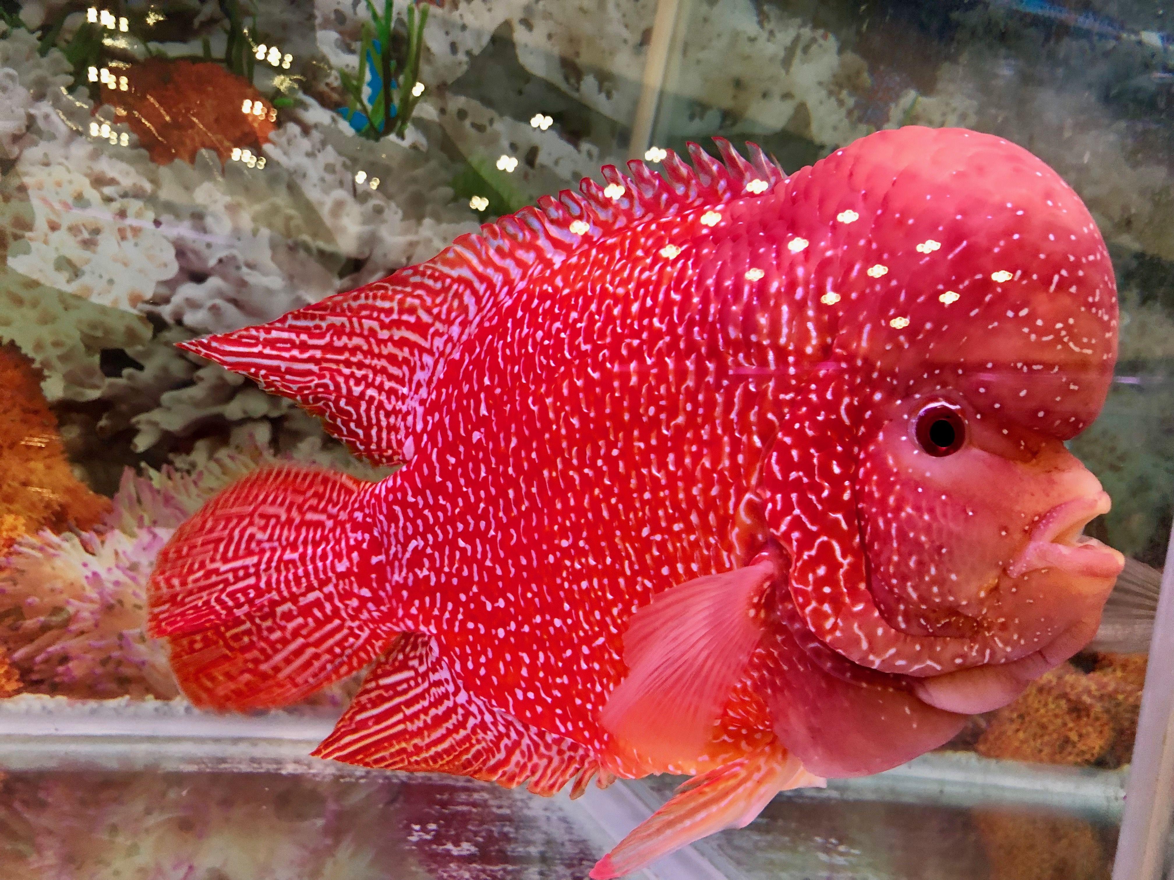 Pin By Mushun On 55 Gal Aquarium Fish Tropical Fish Aquarium Fish