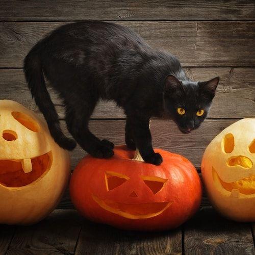 Il vero orrore di Halloween: la caccia al gatto nero. La notte di Halloween è caccia al gatto nero: ogni anno, secondo le associazioni di protezione animali, ne spariscono circa 3mila, vittime di stupide superstizioni o scherzi macabri.