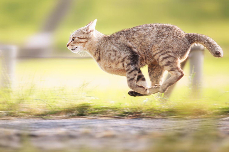 картинка кот бежит на работу парк