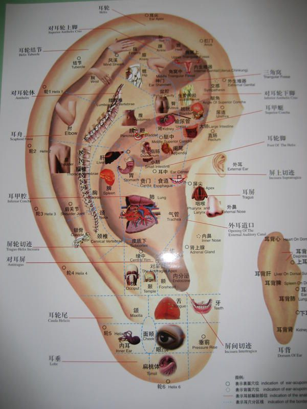 Chinese System of Ear Acupuncture Chart