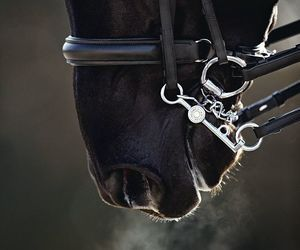 Everything Equine