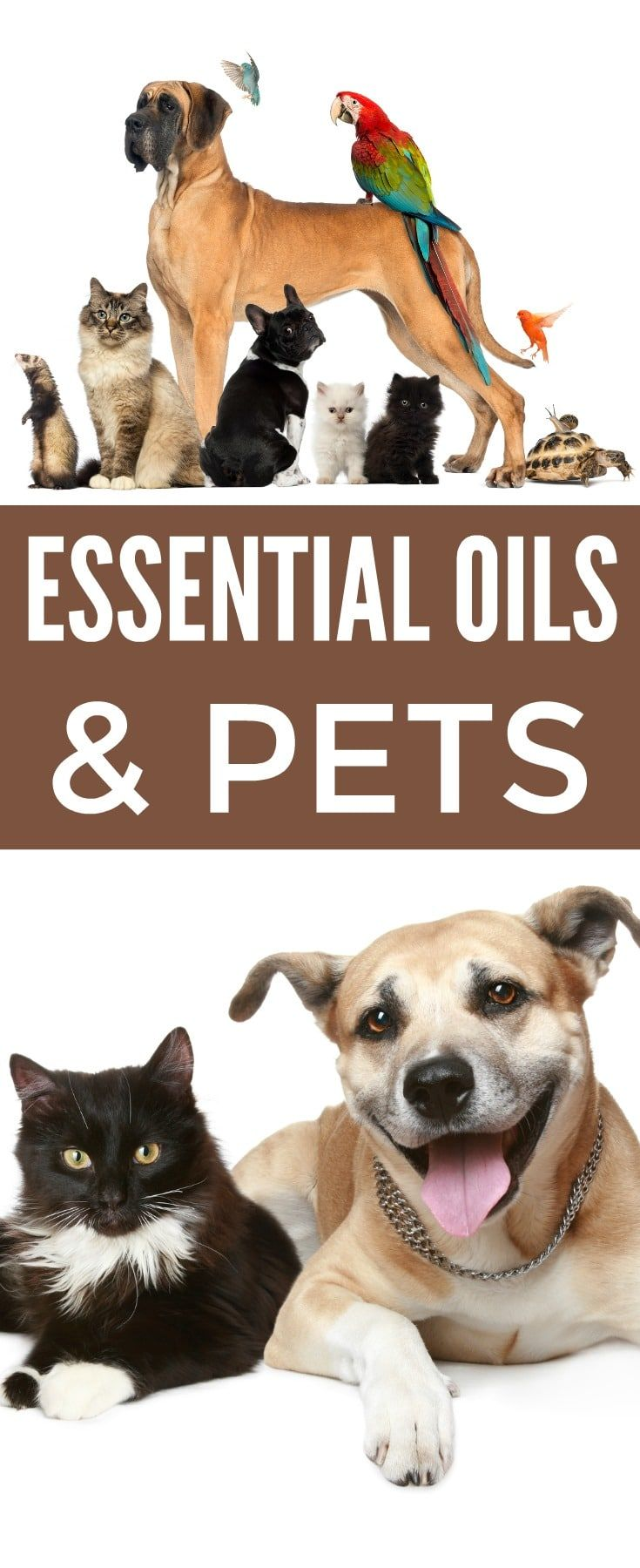 Essential Oils and Pets What You Need to Know Pets