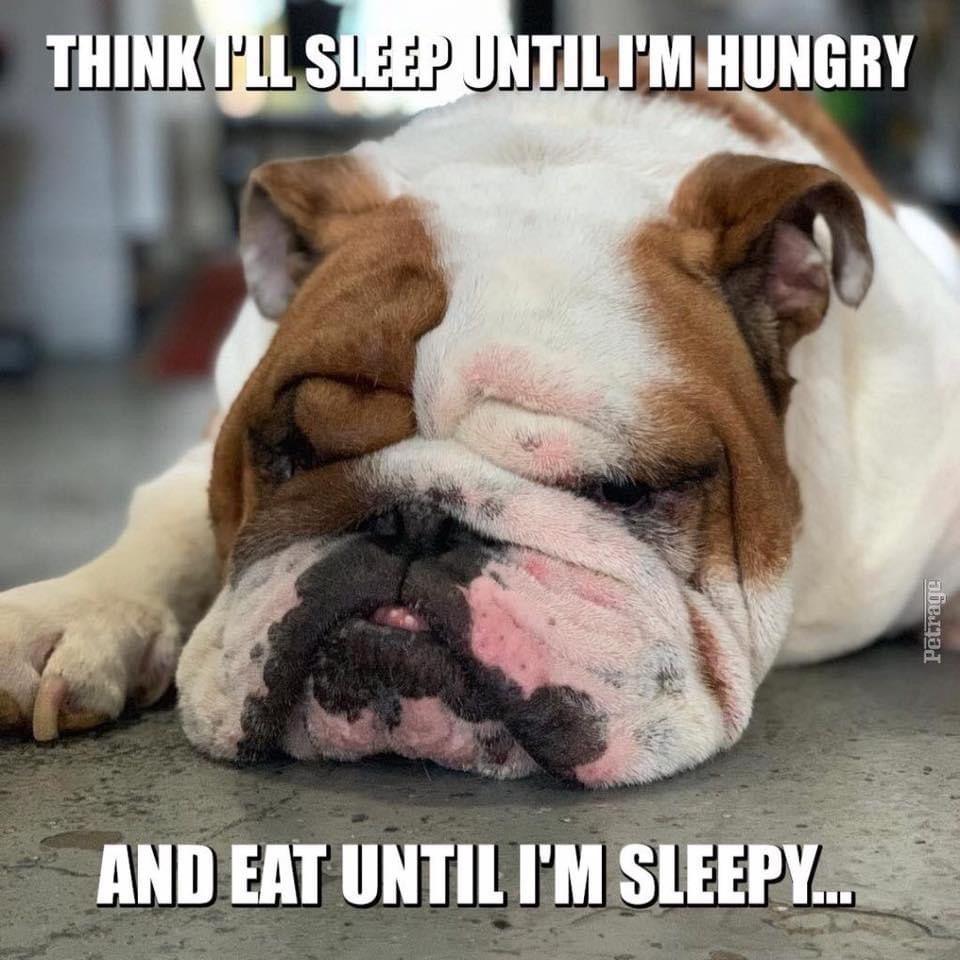 Pin By Fruzsi On Bulldog Memes In 2020 Bulldog Meme English Bulldog Funny Bulldog Funny