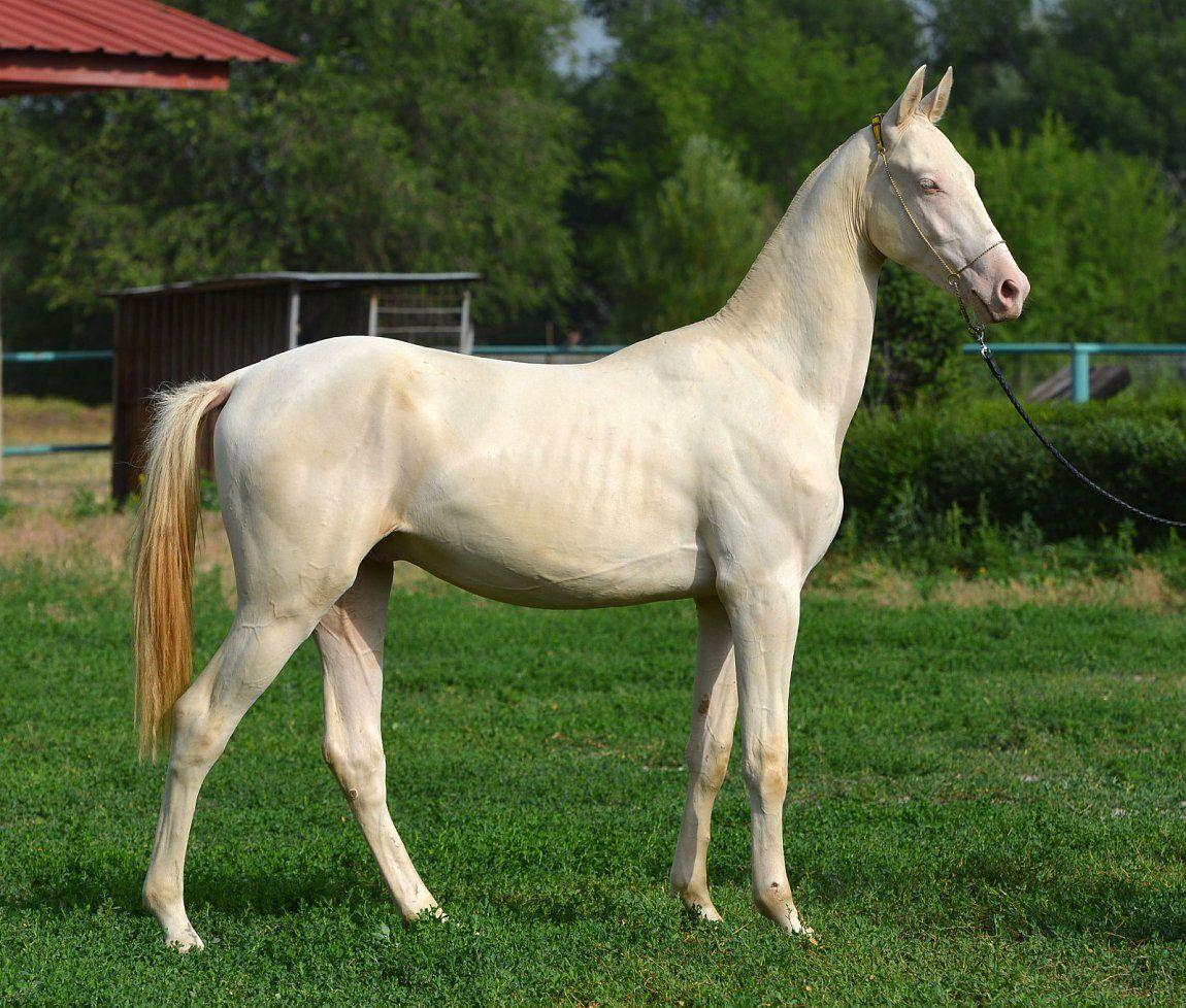 вопрос интересует фото бежевых коней очень тонкий процесс
