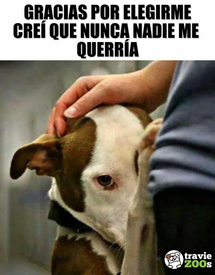 Yo Te Adoro Animales Frases Perros Cuidar Animales