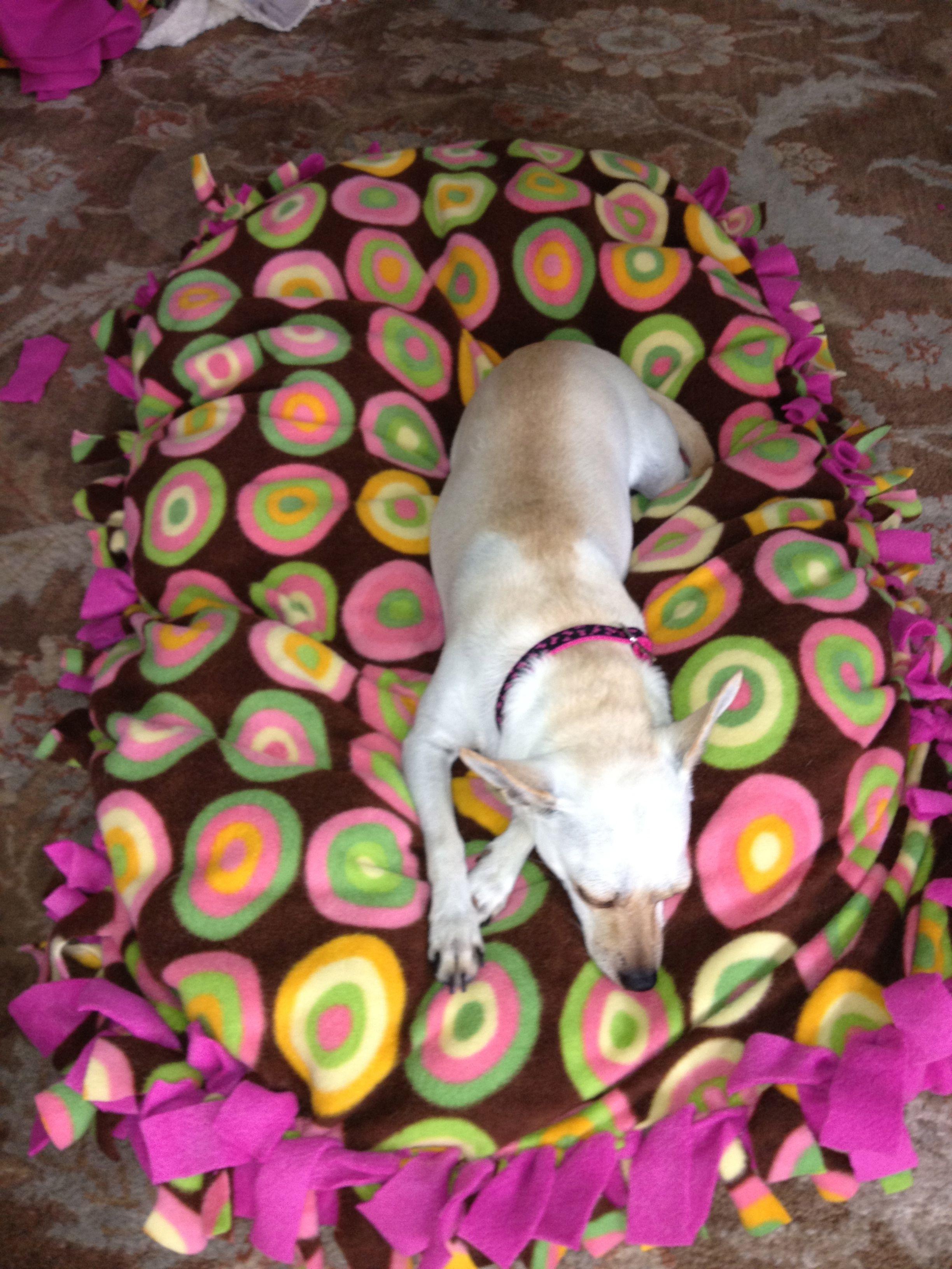 Fringe Orthopedic Dog Bed : fringe, orthopedic, Little, Ideas,, Random, Things, Stuff,
