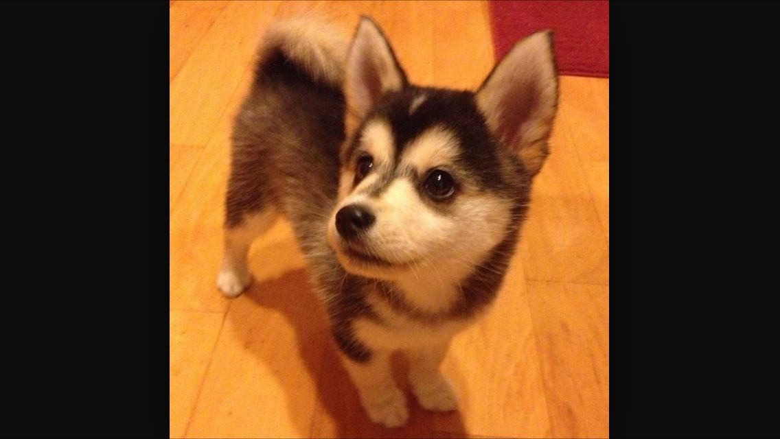 This   Dog it is cute