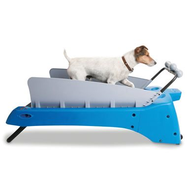 The Canine Treadmill Hammacher Schlemmer Dog Treadmill Your
