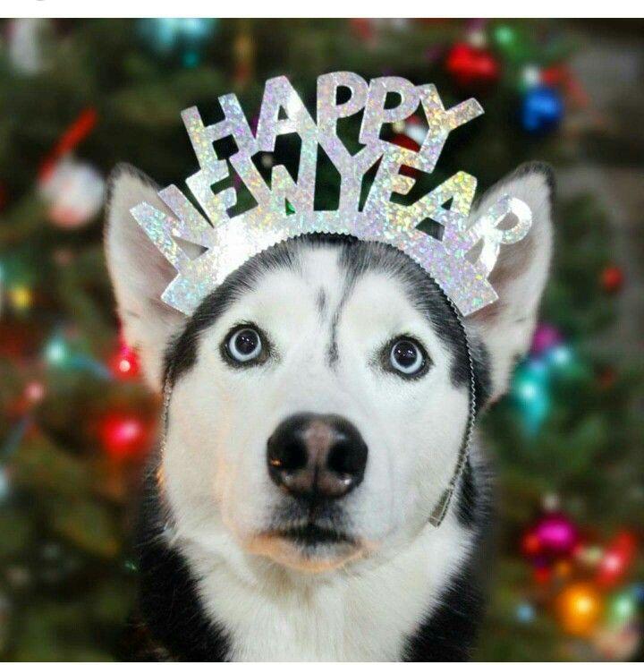 Siberian Husky Happy New Year Dog Holiday Husky Siberian Husky