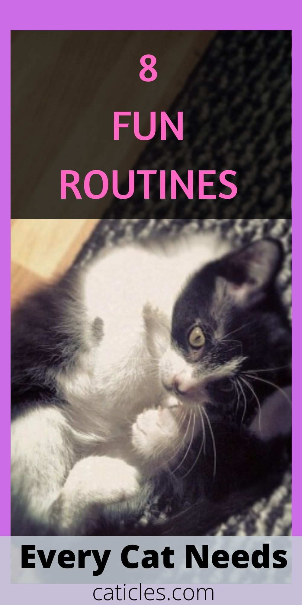 Cat Rituals That Stop Your Cat From Waking You At 3 Am Caticles In 2020 Kitten Care Raising Kittens Cats And Kittens