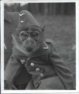 Luftwaffe Mascot The Rarely Seen Luft Affe Uniform