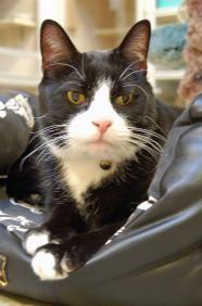 Use Petfinder To Find Your Next Pet Pet Adoption Pet Search Pets