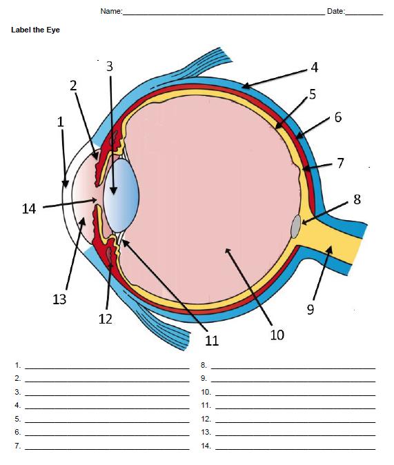 Anatomy Of The Eye Labeling Eye Anatomy Biology Worksheet Biology Notes