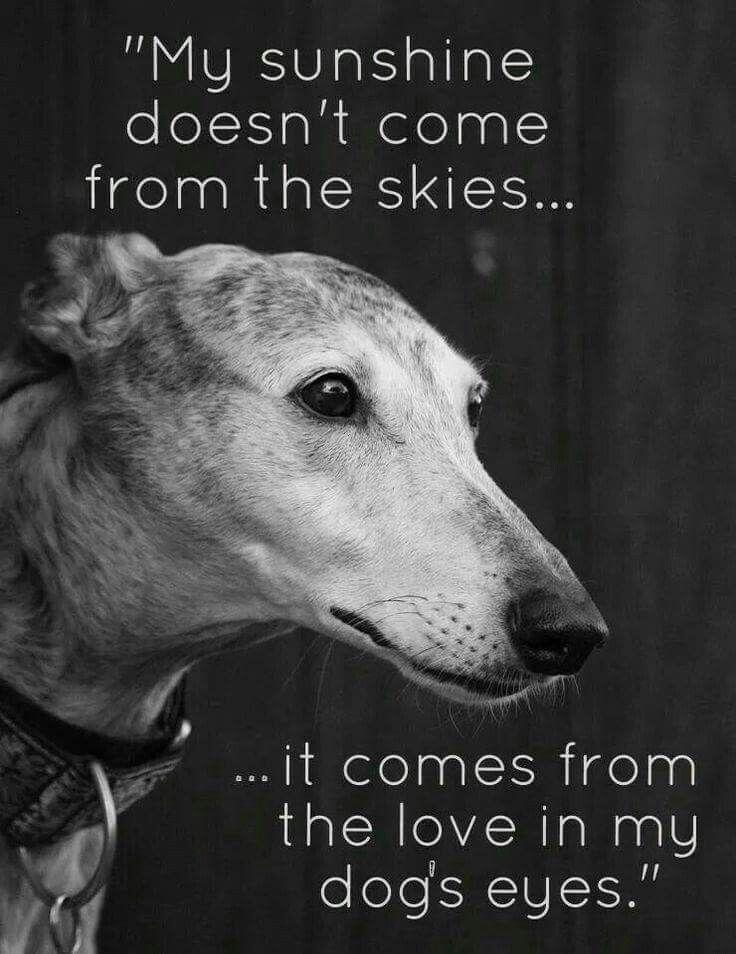 Pin By Cindy Mangum On Animals Dogs Dog Love Greyhound