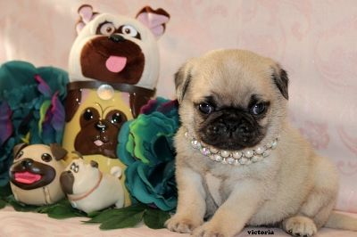 Fairytailpuppies Where Pets Are Family Too Victoria Pets