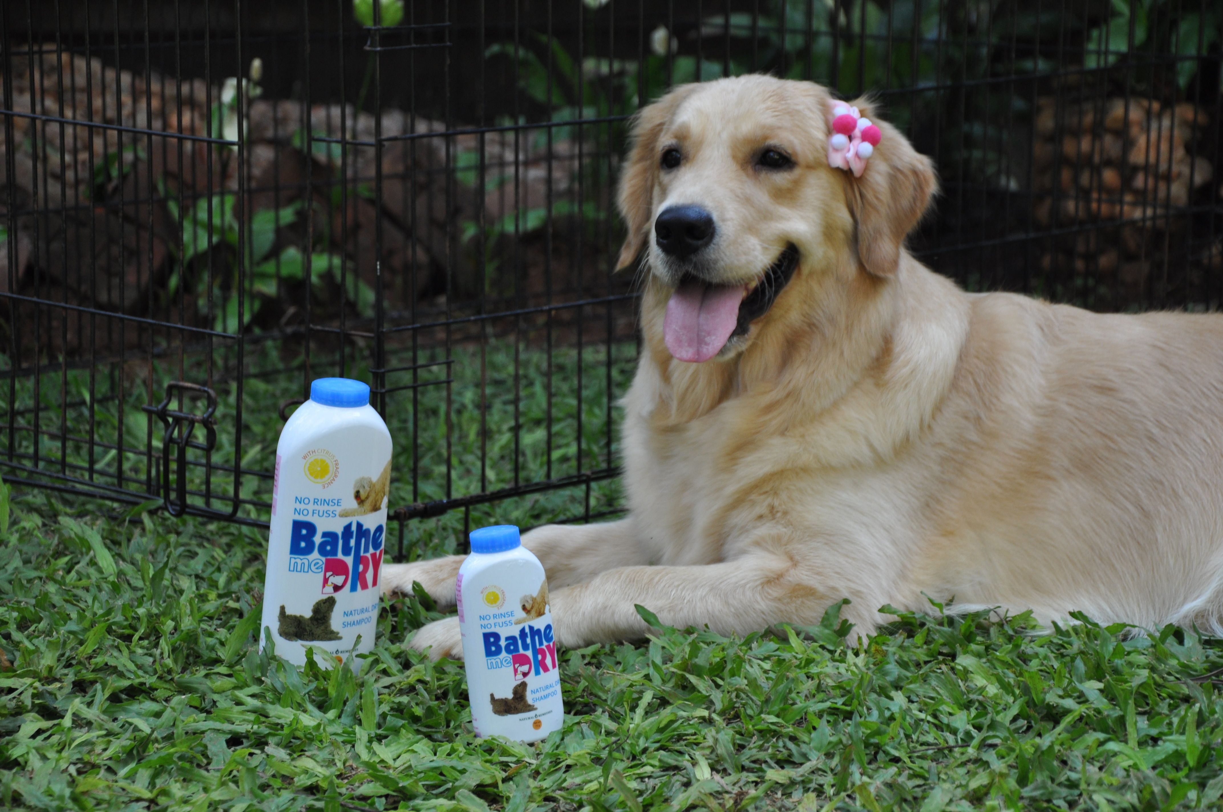 Bathe Me Dry A natural dry shampoo for dogs Dog