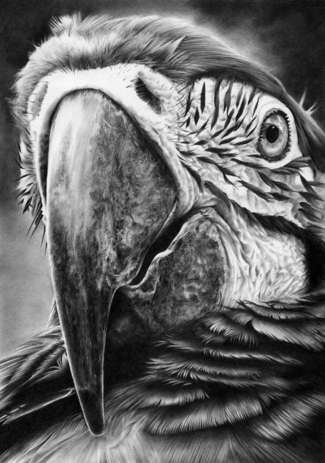 Up close and personal pencil drawing by peter williams