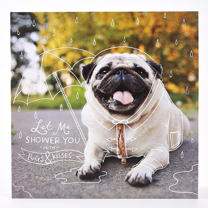 Shower You With Pugs Kisses Pug Card Card Factory Pugs