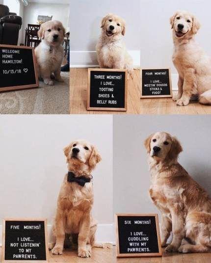 Pin Van Diede Meerbeek Op C U T E Honden Hondjes