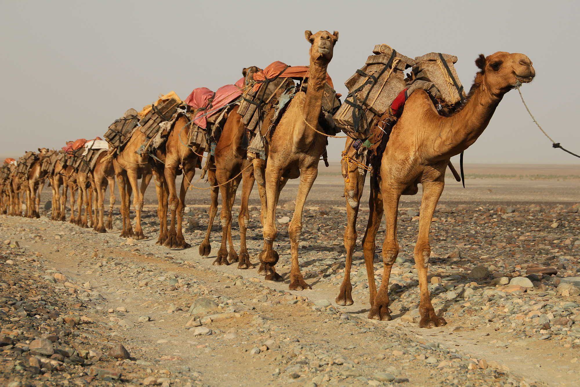 Elegant The Group Was On A Quest To Find The Ruins Of An Ancient, Remote Outposta Destination That Would Have Taken Days To Reach By Camel This Was A