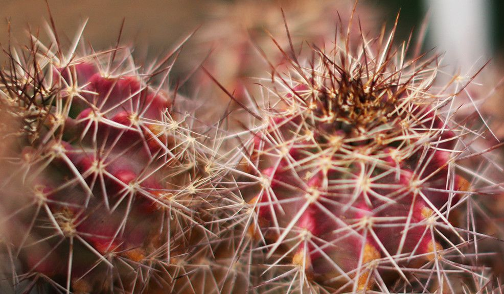 Glimpse: The Chihuahuan Desert Nature Center and Botanical Gardens | New American Nomads