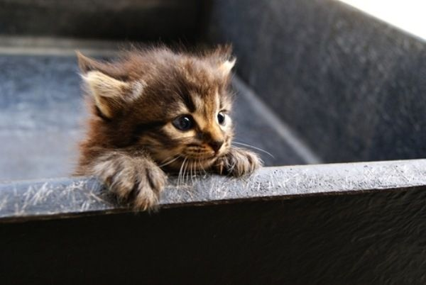Kitten With Images Kittens And Puppies Cute Animals Animals