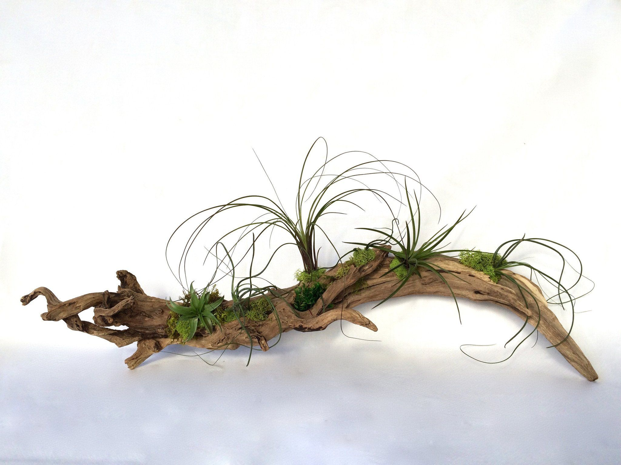 Driftwood Air Plant Planter, Large Air plants, Plants