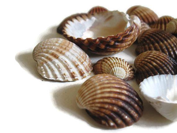 Scallop Sea Shell Crafts Supplies Amber Pink Grey Tan Cardium Coastal Decor