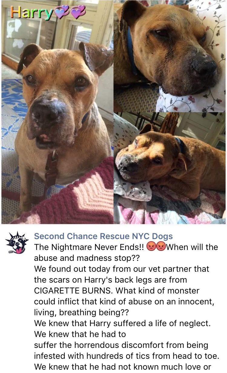 6/12/16 HARRY UPDATE - BREAKING MY HEART - I LOVE YOU PRECIOUS WONDERFUL BOY❤️ /ij  https://m.facebook.com/story.php?story_fbid=945707062205016&substory_index=0&id=268612969914432&refid=17&__tn__=%2As