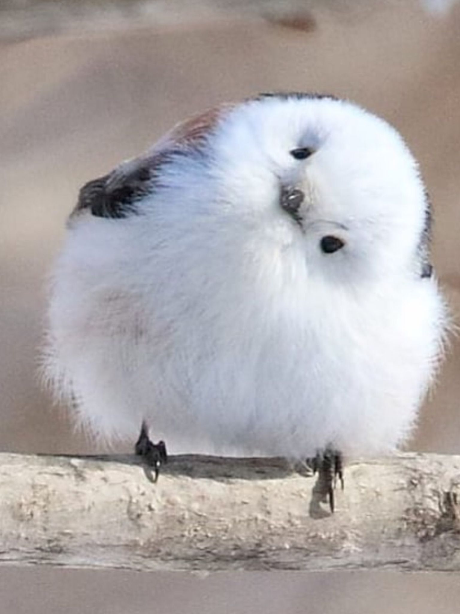 Hi There Sweetie How Are Ya Animals Beautiful Funny Birds Pet