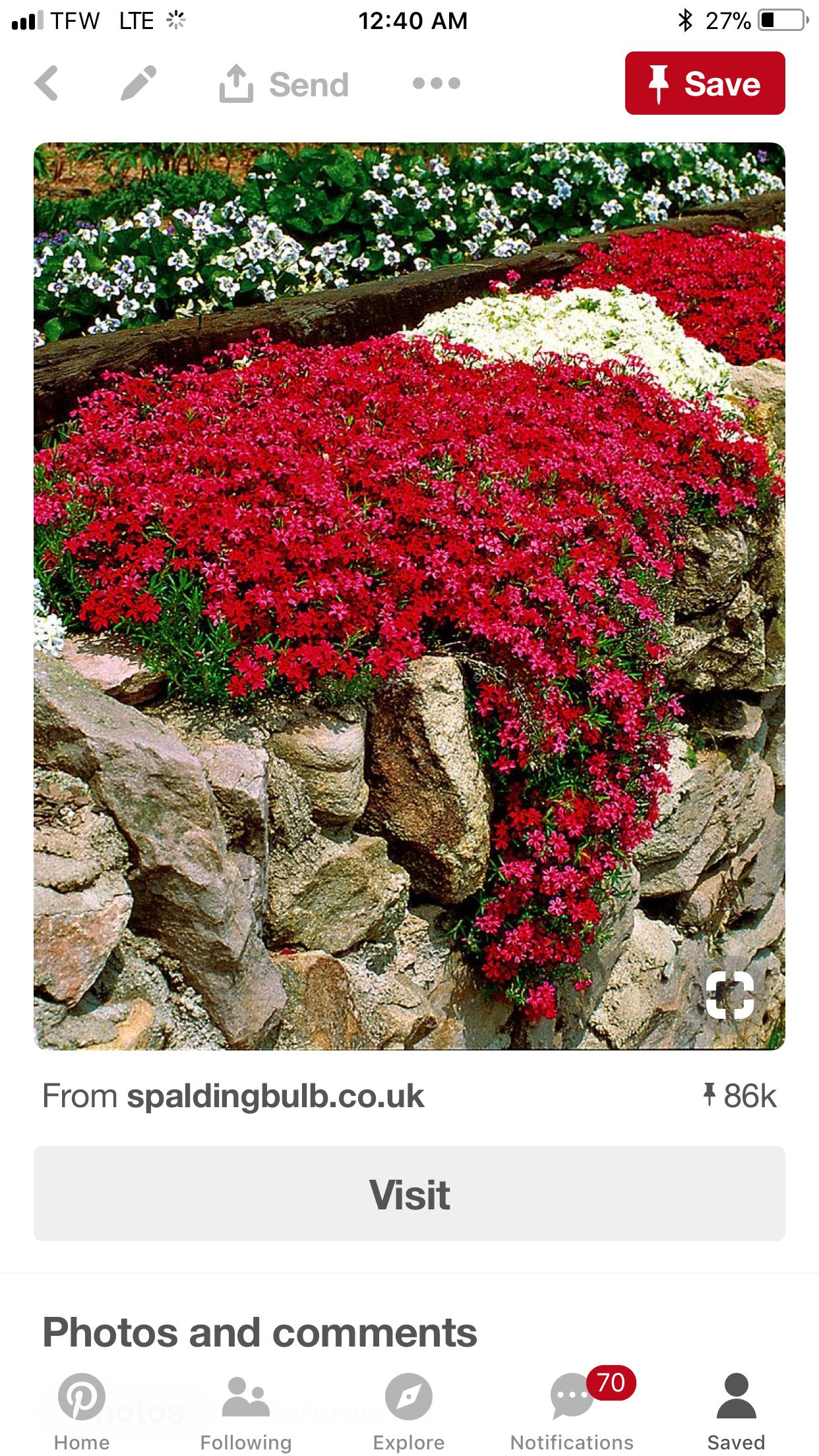 Piante Da Bordura Giardino pin di polenghifranca su fiori da bordura (con immagini