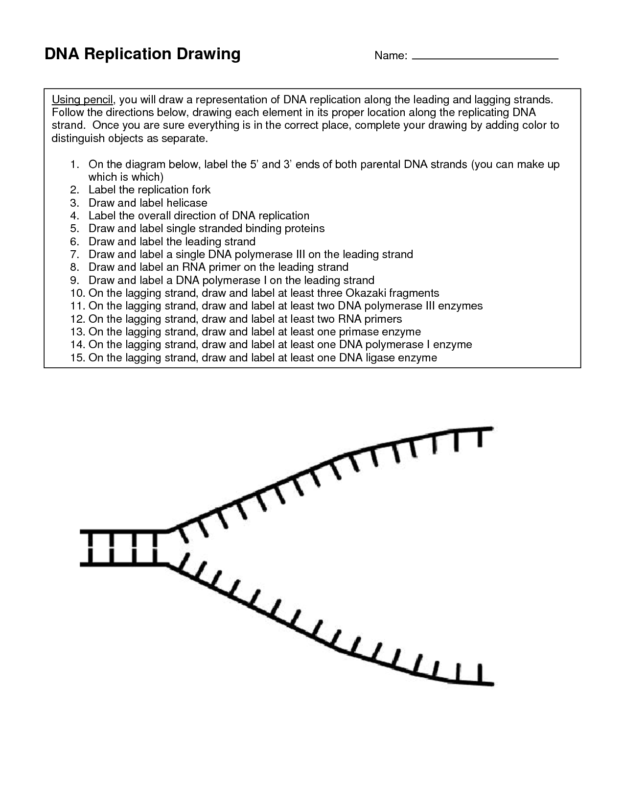 Dna Replication Coloring Worksheet