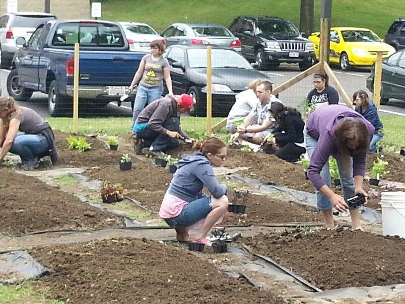 Monday students working in the garden. Alliance Urban