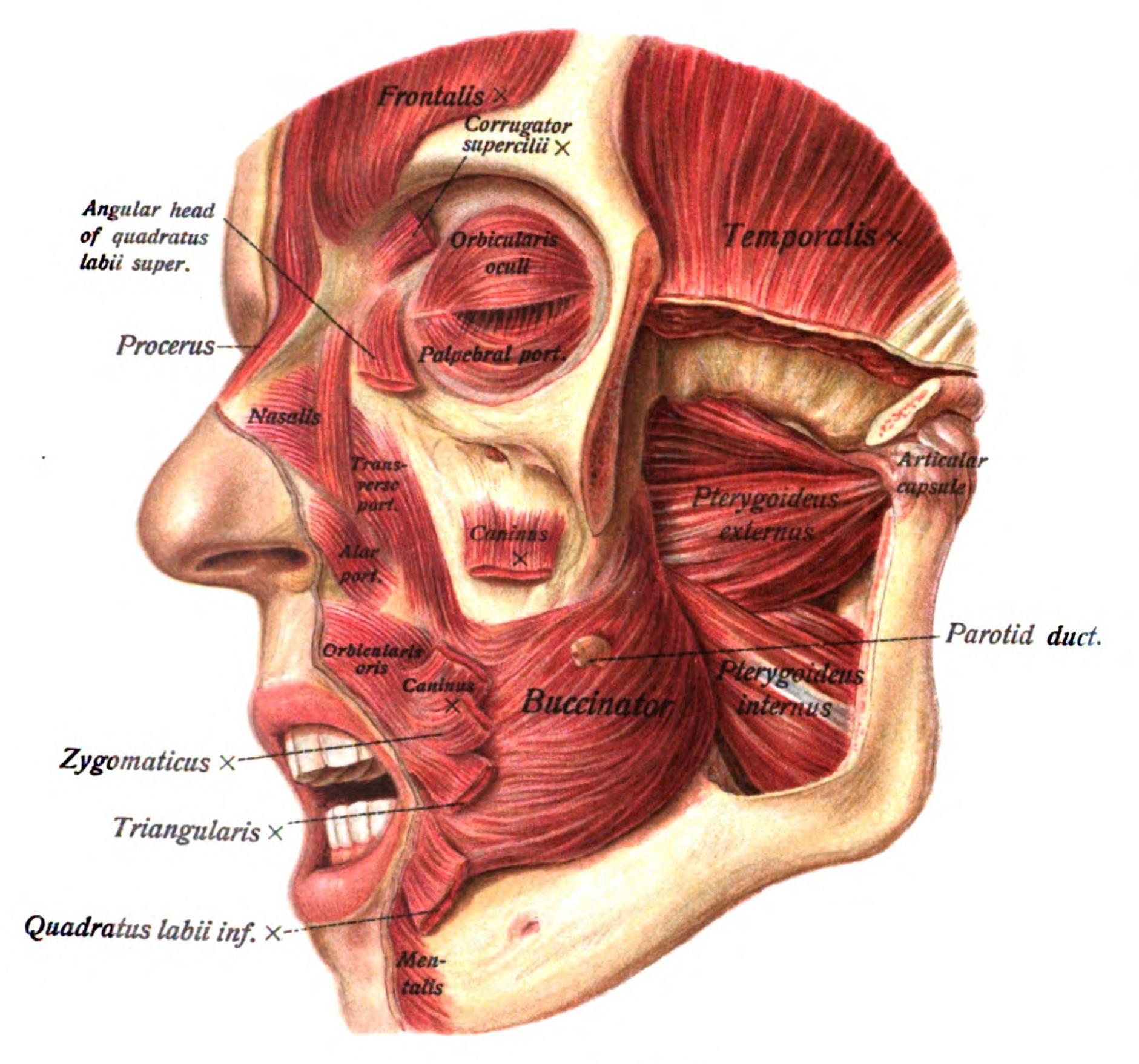 Pin de Chang woo Hahn en Human Anatomy | Pinterest
